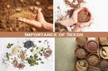 Importance of Seeds