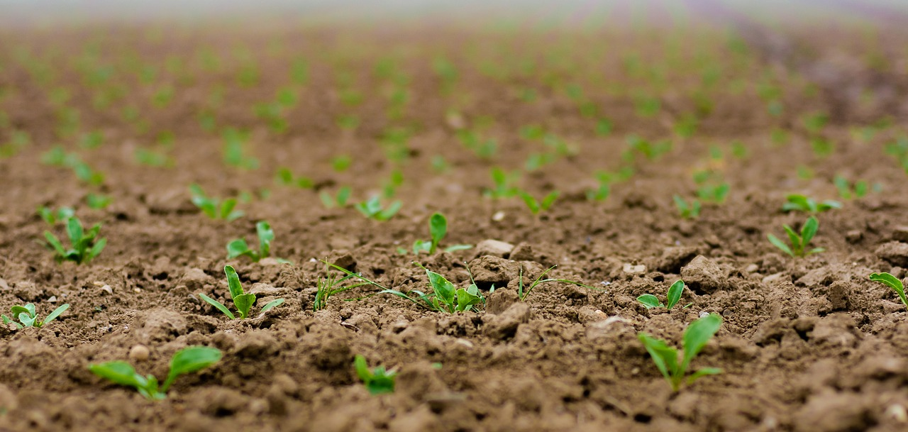 Field conditions for sowing and planting