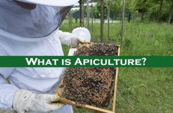 What is Apiculture