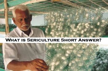 What is Sericulture Short Answer