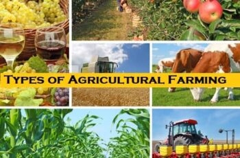 Types of Agricultural Farming