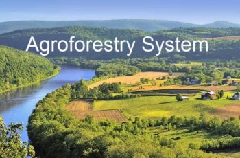 Classification of agroforestry system