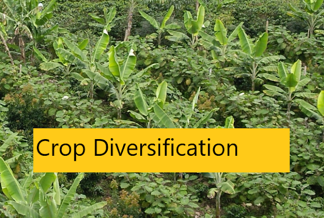 Crop Diversification (Definition, Advantage/Importance)