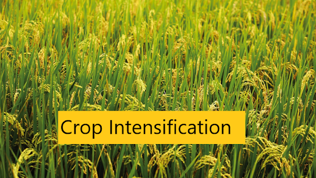Crop Intensification (Definition, Objectives, Advantage, and Disadvantage)