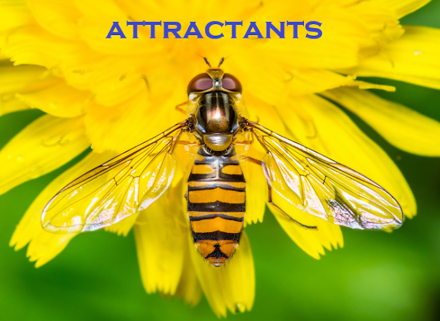 Definition and types of Attractants in Entomology