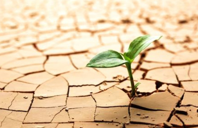 Measurement of Drought Resistance in Plant Breeding