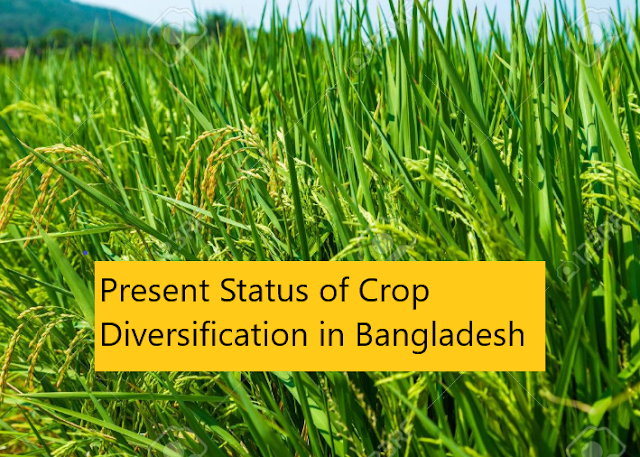 Present Status of Crop Diversification in Bangladesh