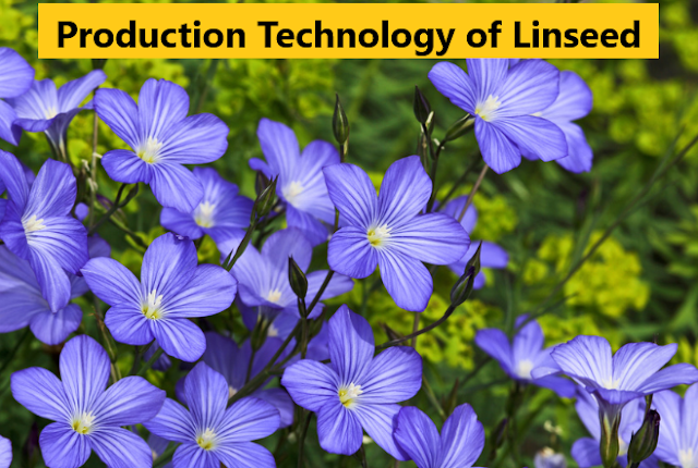 How to Grow Linseed