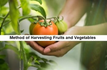 method of harvesting fruits and vegetables