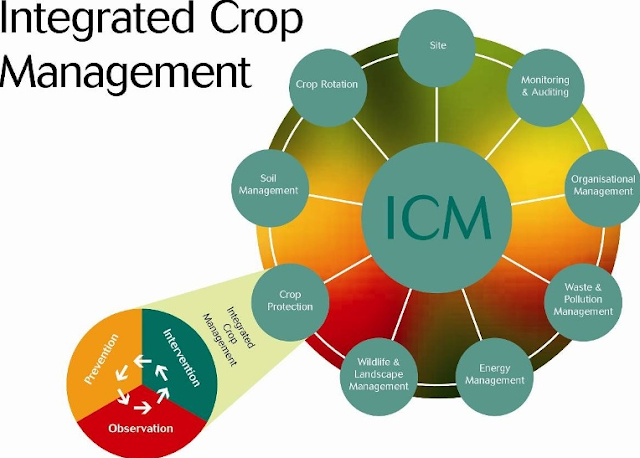 Integrated Crop Management [Definition, Principles, Components]