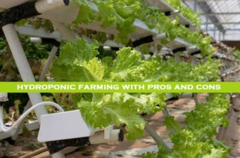 Definition of hydroponic farming with pros and cons