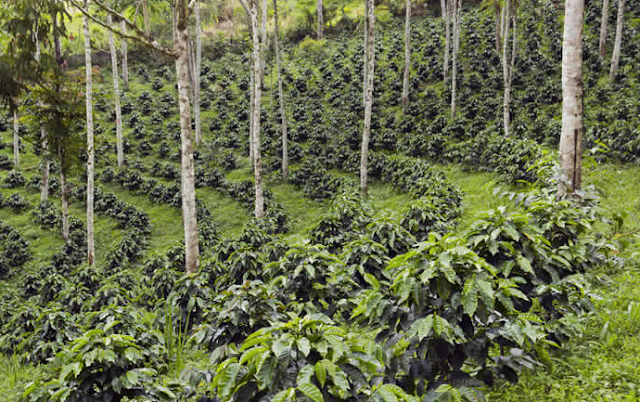 Agroforestry and Social forestry