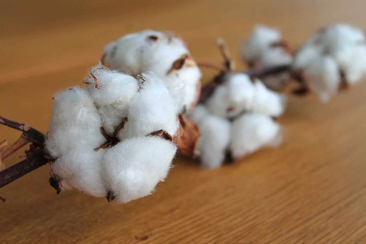 Cotton Production Cost