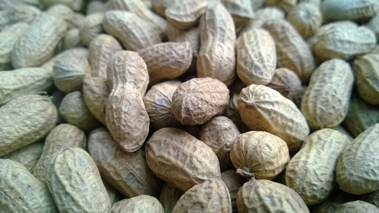 Groundnut Production Cost
