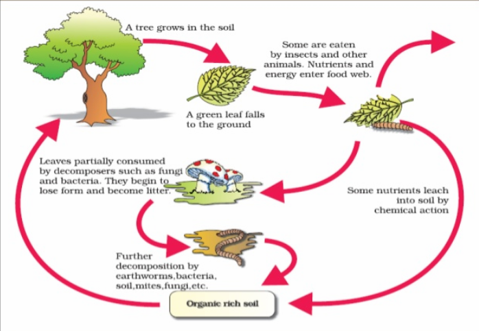 Process of Organic matter Decomposition