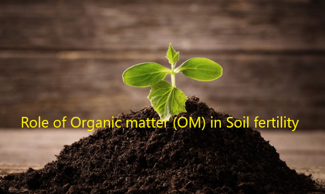 Role of Organic matter in soil fertility