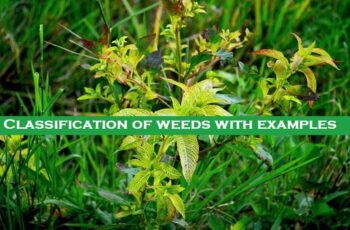 Classification of weeds with examples