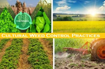 Cultural Weed Control Practices