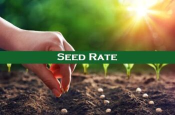 Definition of Seed Rate