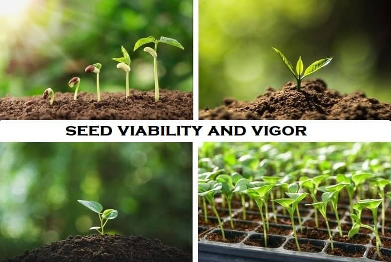 Difference between seed viability and vigor