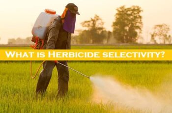 What is Herbicide selectivity