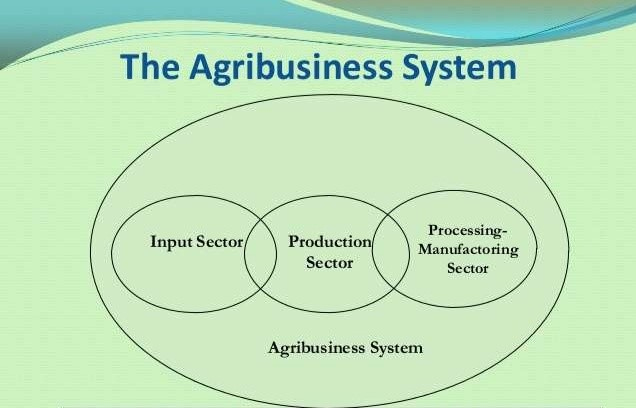3 sectors in agribusiness system