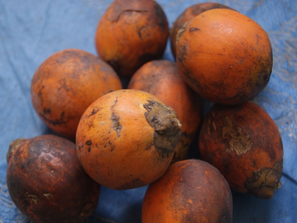 Symptoms and Management of Fruit Rot of Betel nut