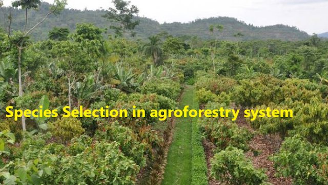 Species Selection in agroforestry system