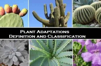Plant Adaptations Definition and Classification