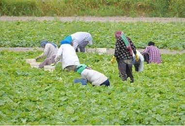 Agricultural Labor Definition