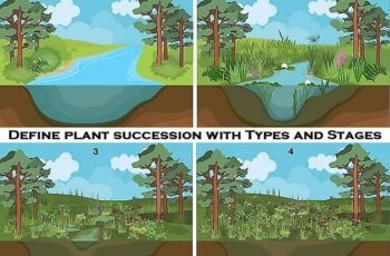 Define plant succession with Types and Stages