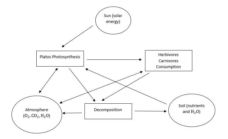 Ecosystem components and their interrelationship