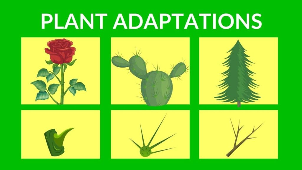 What is plant adaptation?